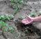 Companion Planting video