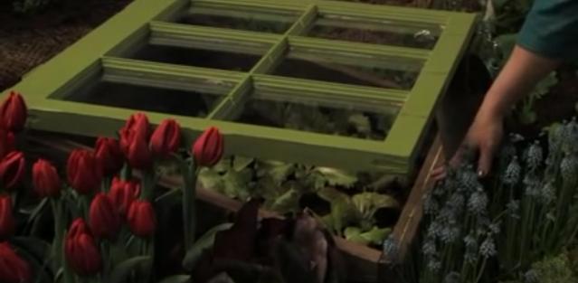 Sustainable gardening ideas