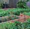 Urban gardening tips