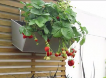 Vertical gardening video