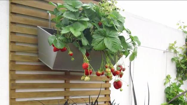 Vertical gardening video