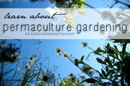 Permaculture gardening