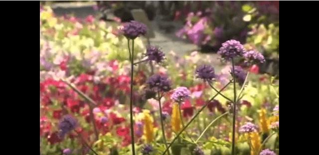 Butterfly garden flowers