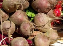 Root vegetable crops