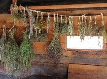 Drying herbs