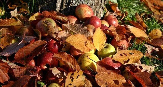 Fall garden tips