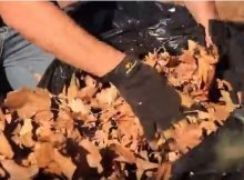 Leaf composting tips