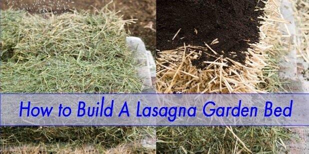 Lasagna garden bed