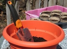Starting a container garden