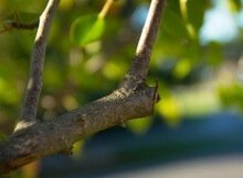 Don't prune in the fall