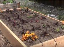 Creating a garden irregation plan