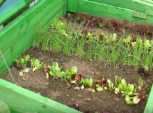 Get growing sooner with cold frames