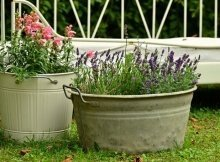 Toxins in planting containers