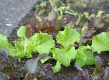 Common sustainable gardening mistakes