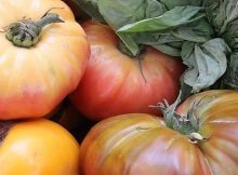Heirloom varieties of tomatoes