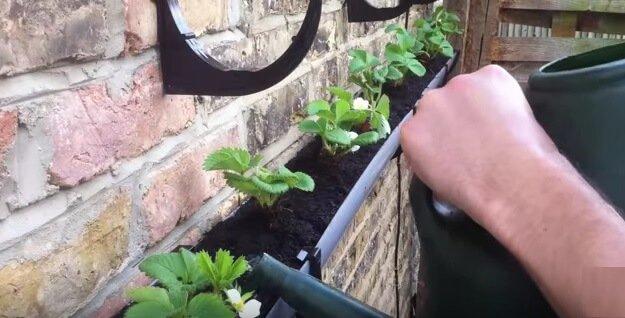 Veggie garden hacks