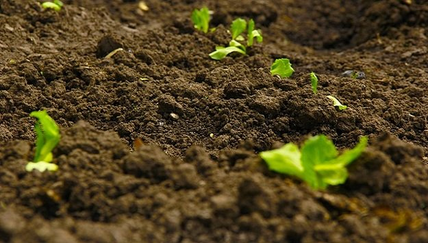 How to improve your garden soil