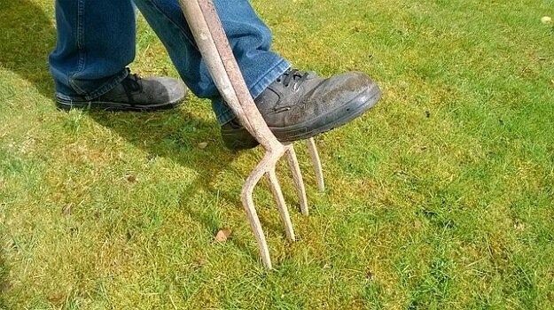 Convert lawn to garden