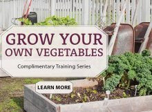 Grow your own vegetables - garden training course