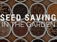 Saving your own seeds