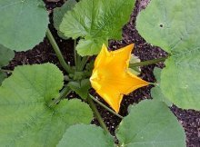 Tips for a sustainable garden