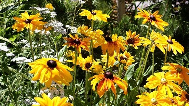 Sustainable gardening tips for climate change