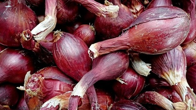 Growing shallots - a guide