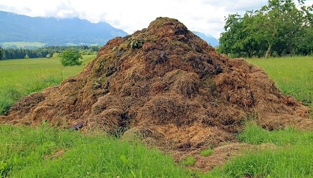 How much compost do you need?