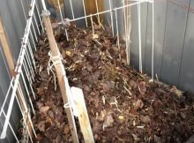 Using fallen leaves in the garden