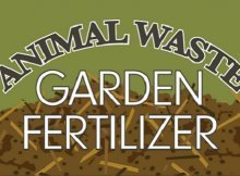 Animal waste as fertilizer