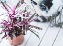 8 great indoor plants
