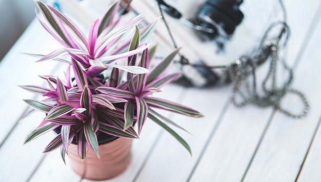 8 great indoor plants