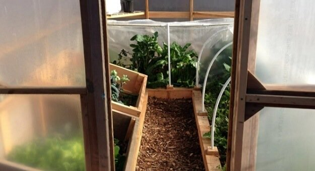Growing winter crops in an unheated greenhouse