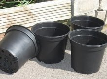 Growing food in plastic containers