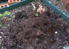 How to enrich your garden soil