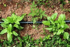 Tips for growing a more sustainable garden