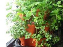 Indoor & Container Gardening Archives - Sustainable Gardening News