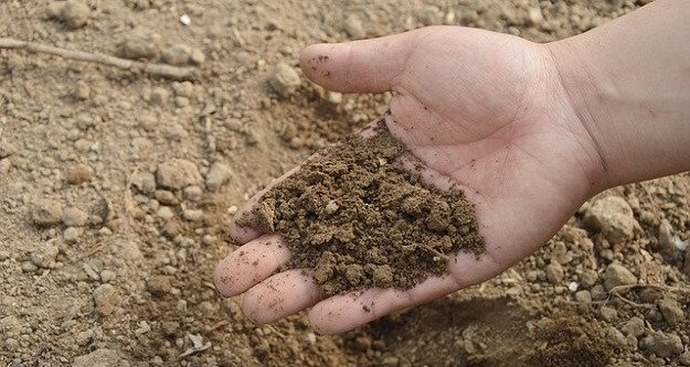 Soil test to check garden soil health