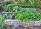 How to have a weed-free garden