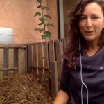 Brown materials for urban composting