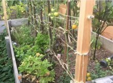 How to build a simple trellis system