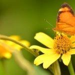 Non-bee garden pollinators