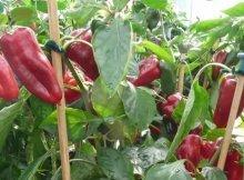 The 10 most nutritious garden crops