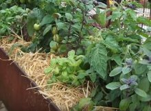 Using organic mulches in the garden