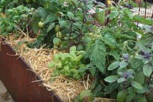 Using organic mulches in the garden