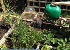 Smart watering tips for saving water in the garden