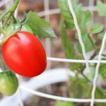 Beginner tips for growing vegetables in containers