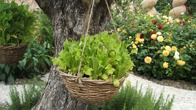 Gardening in hanging baskets