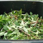 Small-space composting tips