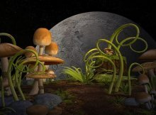 Gardening by the moon